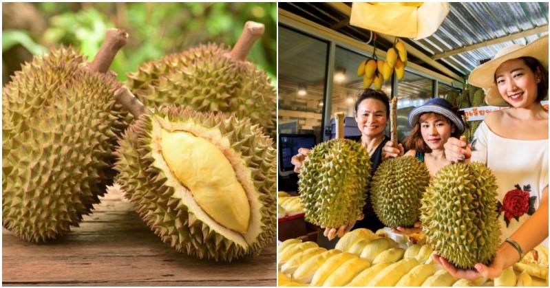 FEATURED IMAGE pilih durian