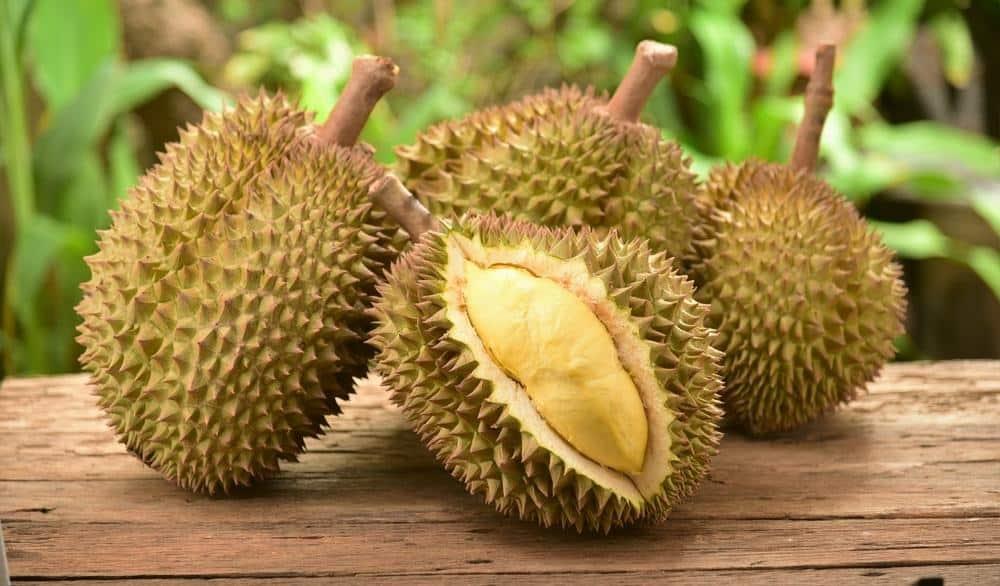 cara_memilih_durian