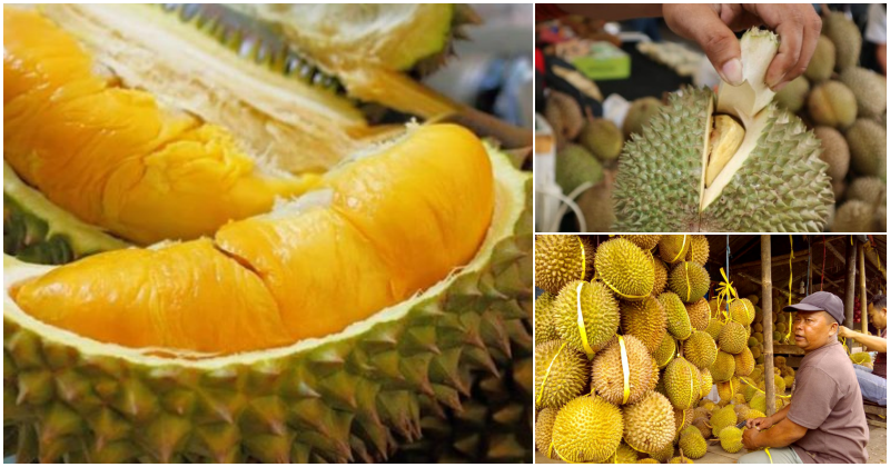collage durian 1