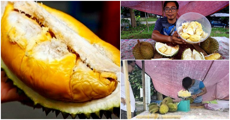 collage durian 2