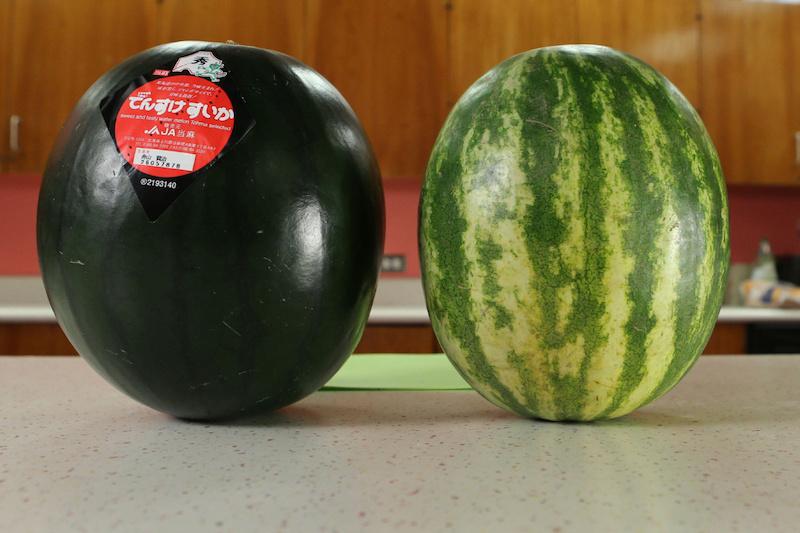 Densuke Watermelon