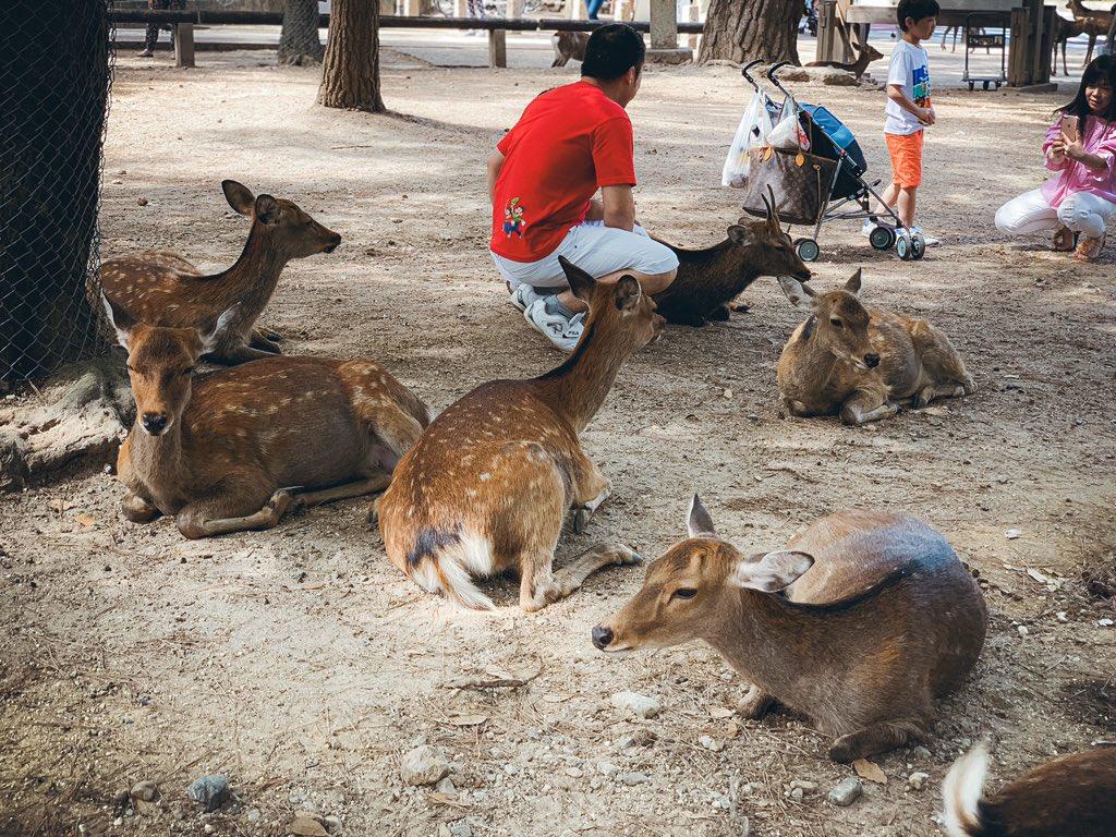 Day 4 – 1- Nara Deer Park1