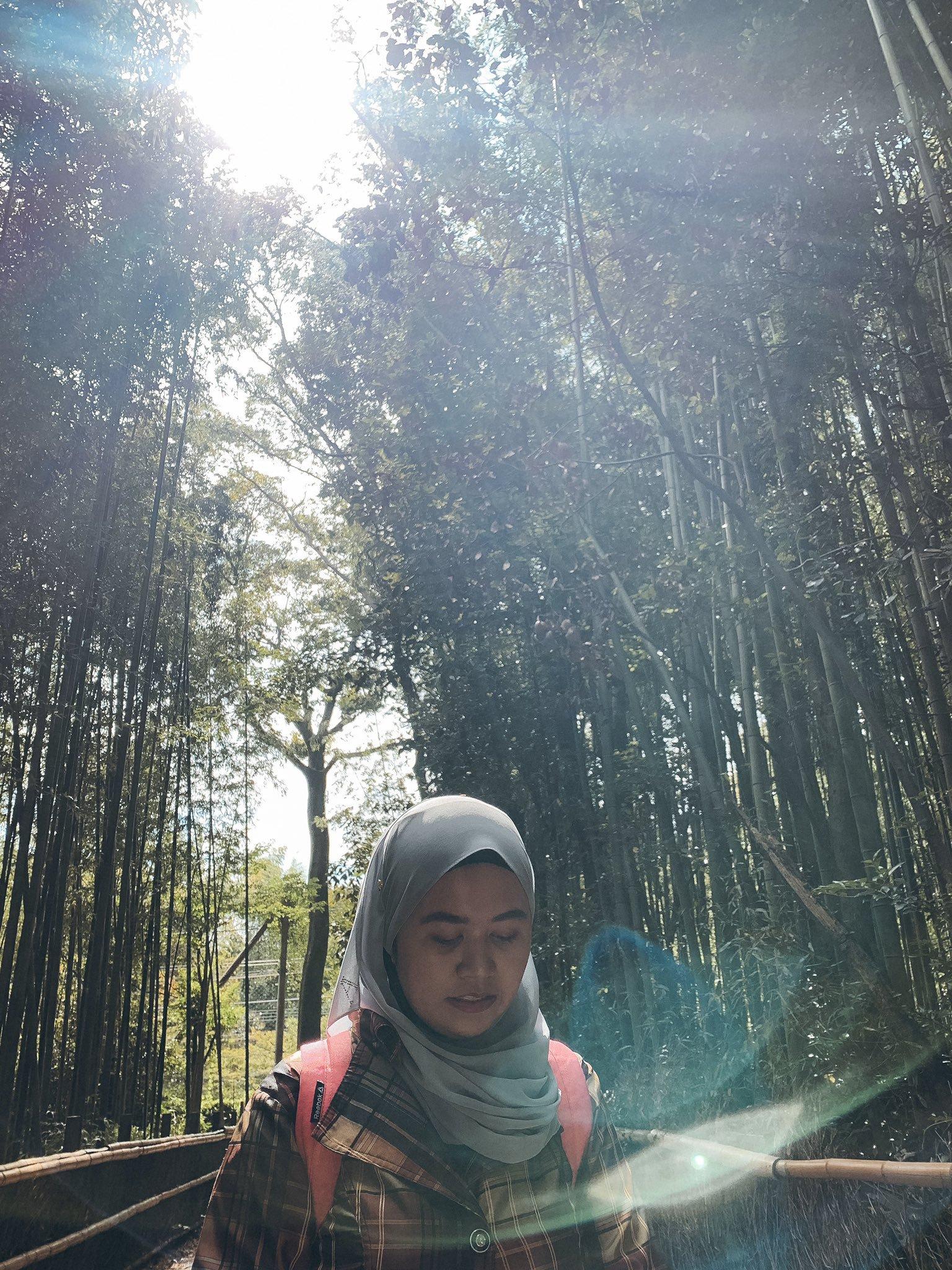 Day 5 Saga Arashiyama, the bamboo forest